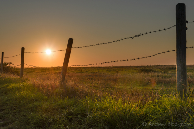 Portland-low-sun-and-barbed-wire-fence-at-Sweet-Hill-fields-06_09_15-2