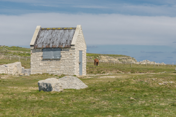 Portland-stone-hut-and-horse-on-the-cliffs-nr.-Portland-Bill-19_04_15