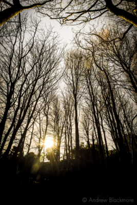 Portland-sun-through-silhouetted-trees-above-St.-Andrews-Church-graveyard-22_03_15-2