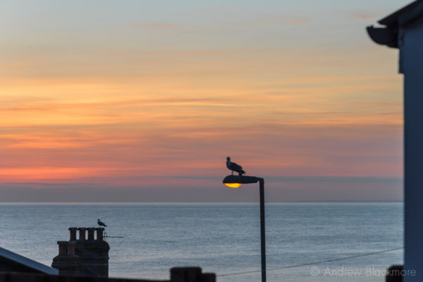Portland-sunset-with-seagull-on-street-light-from-King-Street-22_03_15