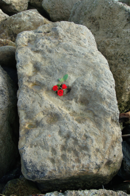 Rose-tribute-on-rock-armour-the-Cobb,-Lyme-Regis-26_04_12