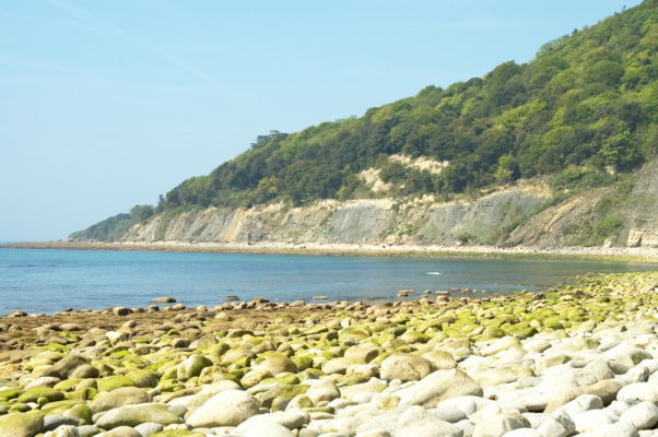 Seven-Rock-Point-and-the-Undercliff-Lyme-Bay-15_05_04