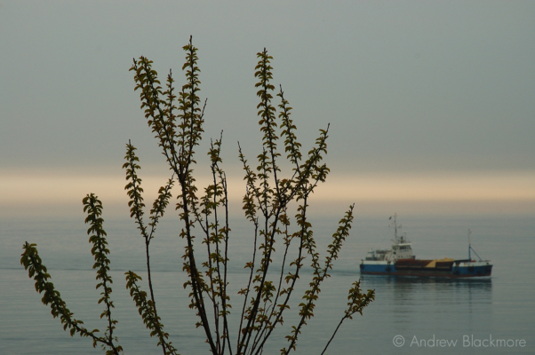 Supply-boat-and-bush-at-dusk-Lyme-Regis-23_04_06