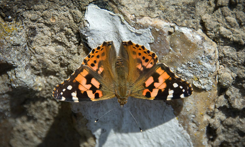 abp-portfolio-header-butterflies-1