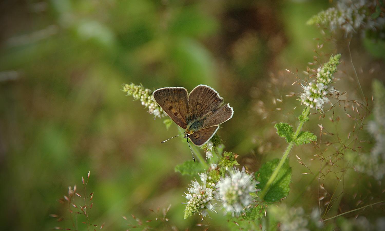 abp-portfolio-header-butterflies-2