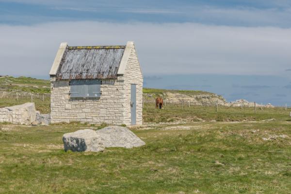 Portland-stone-hut-and-horse-on-the-cliffs-nr.-Portland-Bill-19_04_15