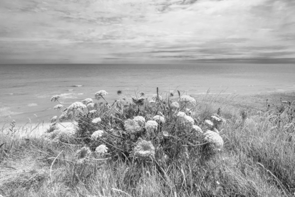 Sea-Carrot-&-the-sea-from-Evans-Cliff Charmouth-01_07_15-b&w