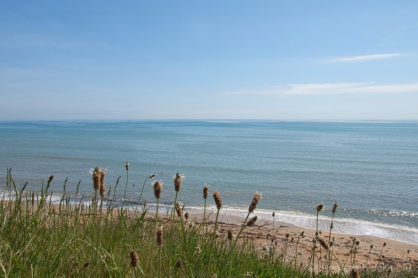 Sea-view-&-Plantain-from-Evans-Cliff Charmouth-28_05_12