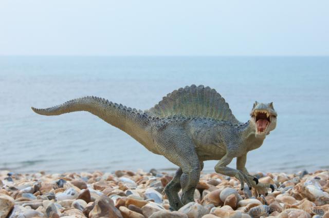 Spinosaurus-aegyptiacus-on-Cobb-Gate-Beach-Lyme-Regis-30_04_11