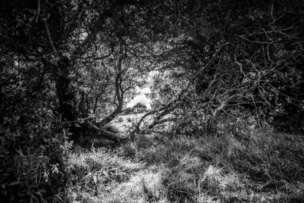 Sunlit-gap-in-a-headgrow-at-The-Spittles,-Lyme-Regis-30_07_15-b&w