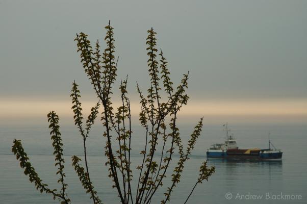 Supply-boat-and-bush-at-dusk-Lyme-Regis-23_04_06