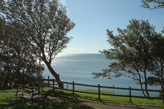 Sycamore-trees-and-view-from-Langmoor-Gardens,-Lyme-Regis-21_08_04