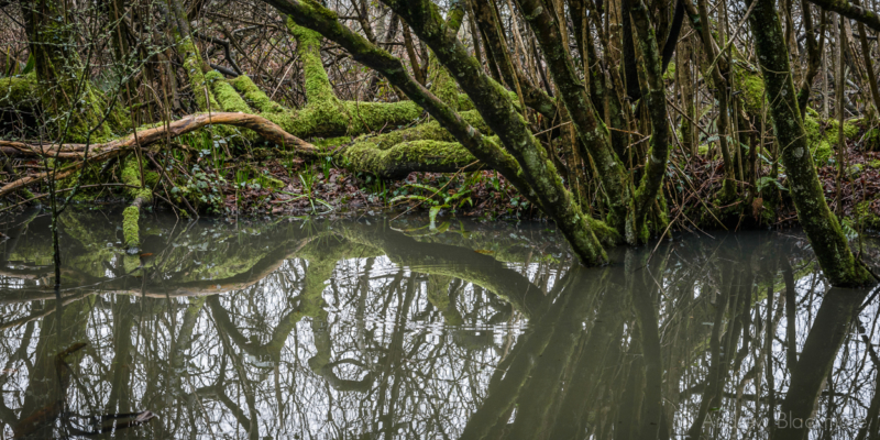 Trees-with-pond-reflections-in-The-Spittles,-Lyme-Regis-31_01_16-2