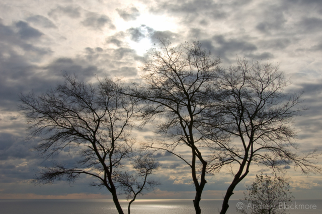 White-Poplars-(silhouette)-and-cloudscape-Lister-Gardens,-Lyme-Regis-16_11_07