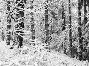 Snow Scenes, Devon